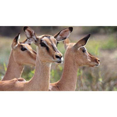 Für weitere Info hier klicken. Artikel: Canon Academy Tierfotografie Zoom Erlebniswelt 18.07.17