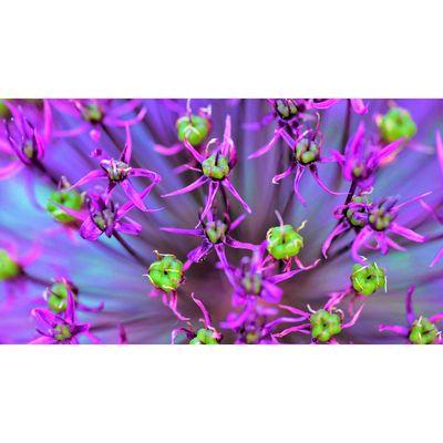 Für weitere Info hier klicken. Artikel: Makrofografie im Botanischen Garten 01.06.19