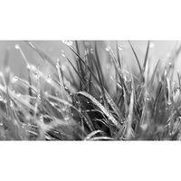 Für weitere Info hier klicken. Artikel: Canon Academy Makrofotografie im Botanischen Garten 25.06.19