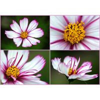 Für weitere Info hier klicken. Artikel: Makrofotografie im Botanischen Garten 23.05.20