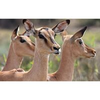 Für weitere Info hier klicken. Artikel: Tierfotografie in der ZOOM Erlebniswelt 20.06.21