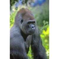 Für weitere Info hier klicken. Artikel: Tierportraits im Krefelder Zoo 08.05.20