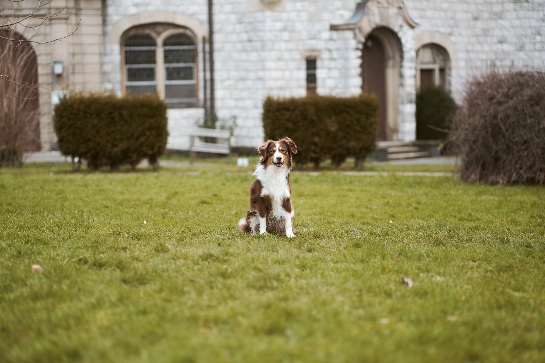 Hund auf Grünfläche