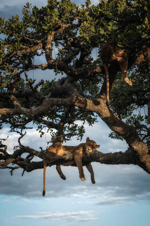 Tierfotografie Sony Chris Schmid