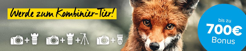 Schlauer Fuchs als Kombinier-Tier