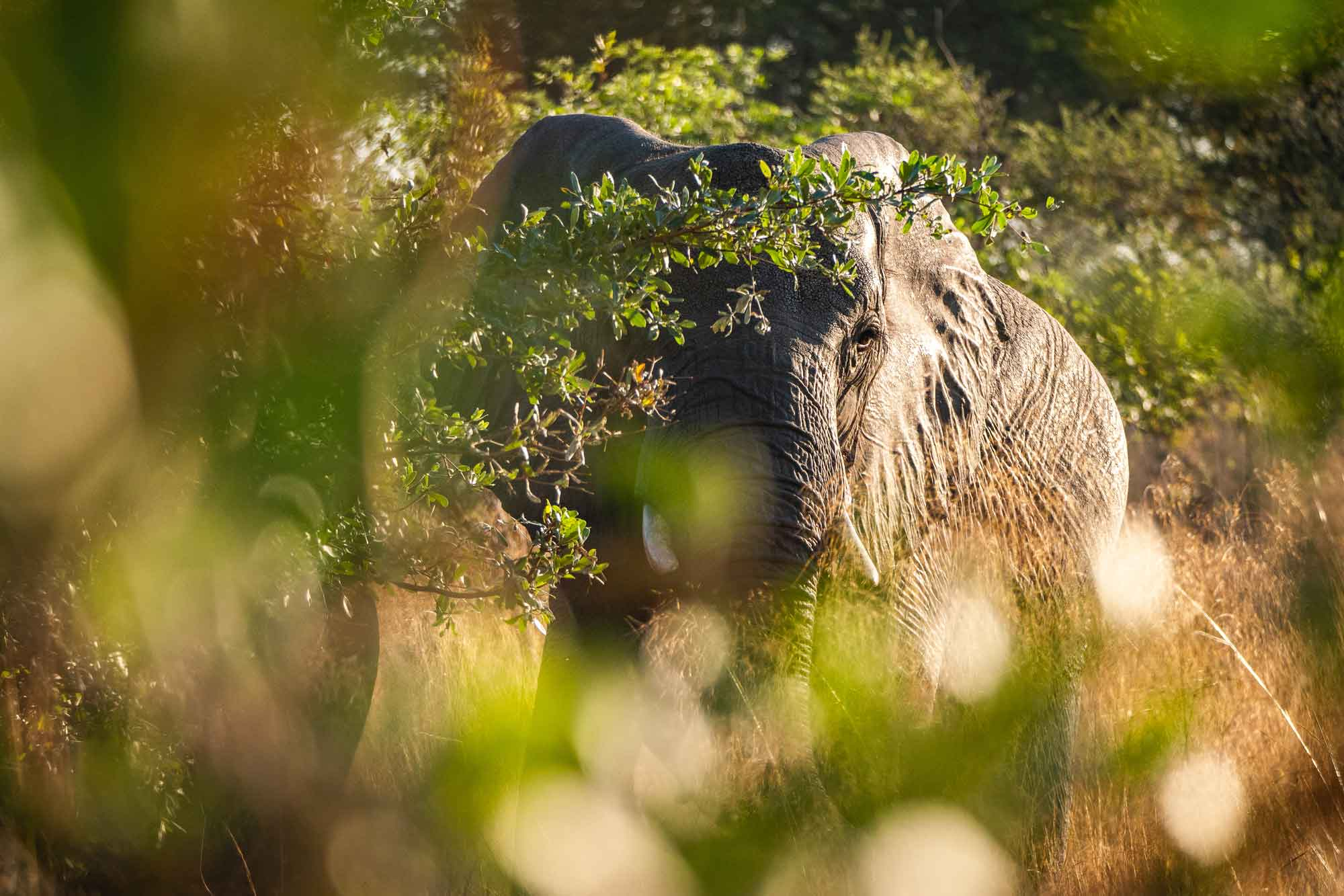 elefant-afrika-panasonic