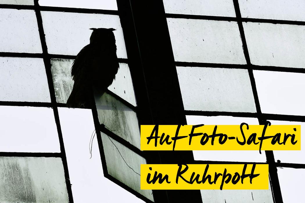 Schnappschuss No. 61 - Foto-Safari im Ruhrpott