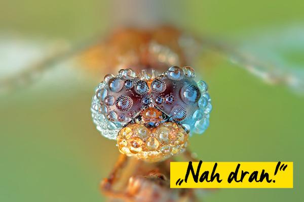 Ergebnis Fotowettbewerb Nah dran