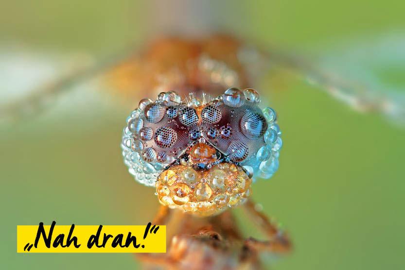 Schnappschuss: Fotowettbewerb Nah Dran