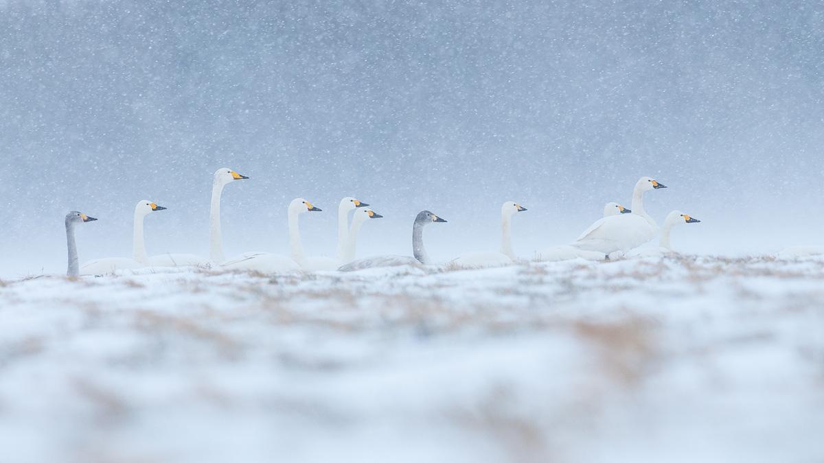 Fotowettbewerb Natur Platz 5 Rolf Mraz