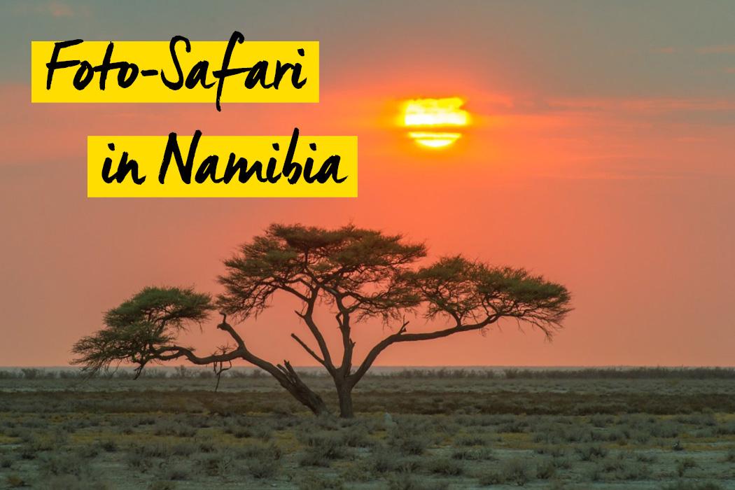 Fotosafari in Namibia