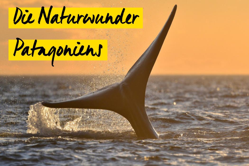 Die Naturwunder Patagoniens