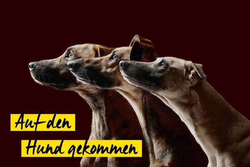 Schnappschuss: Auf den Hund gekommen