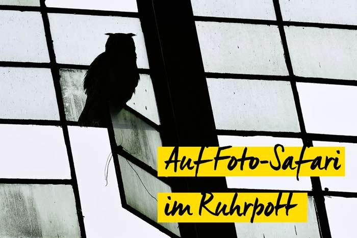 Auf Foto-Safari im Ruhrpott