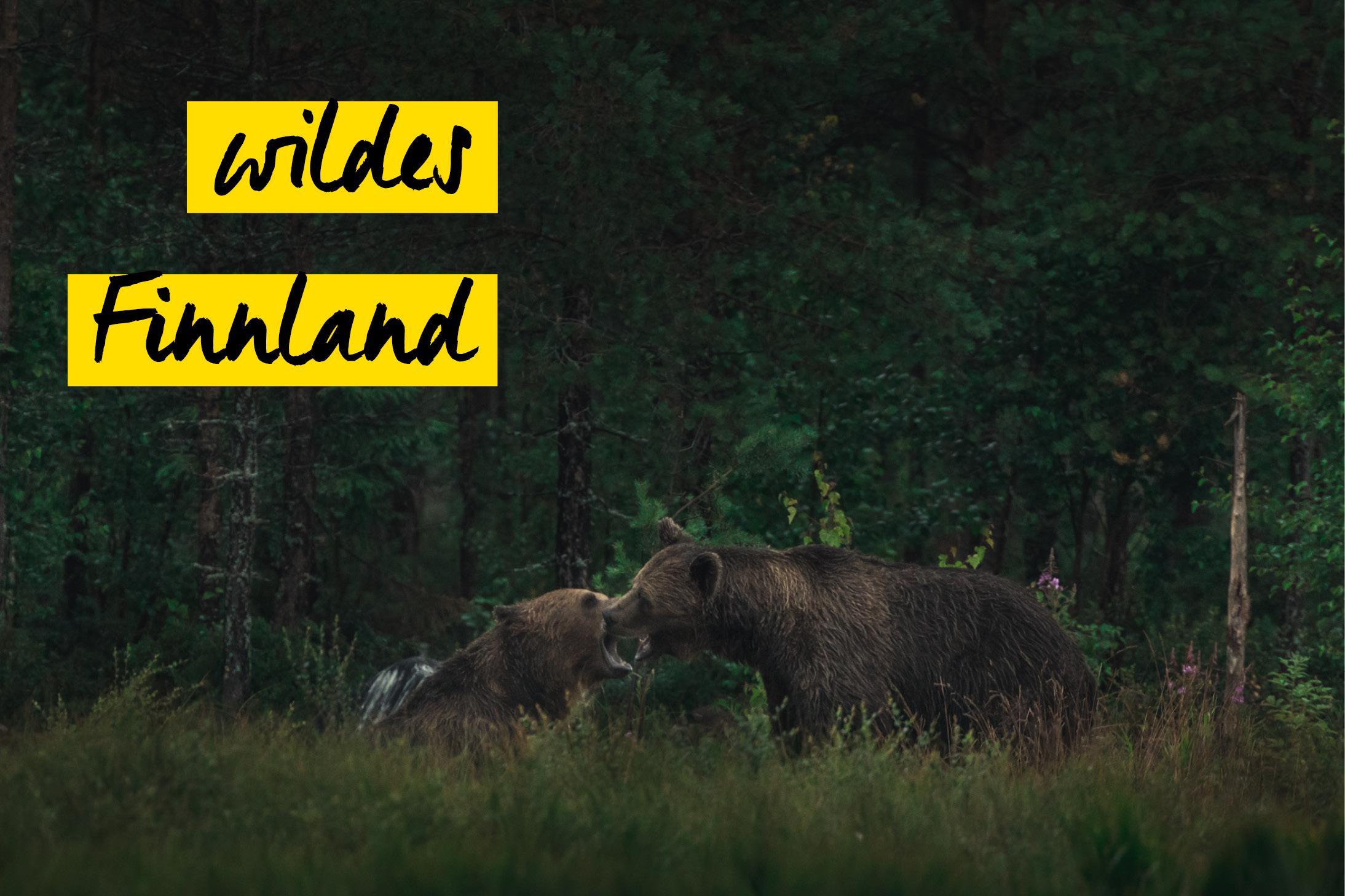 Eine Nacht in der Wildnis Finnlands